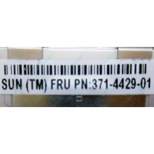 Серверная память SUN (FRU PN 371-4429-01) 4096Mb (4Gb) DDR3 ECC в Оренбурге, память для сервера SUN FRU P/N 371-4429-01 (Оренбург)